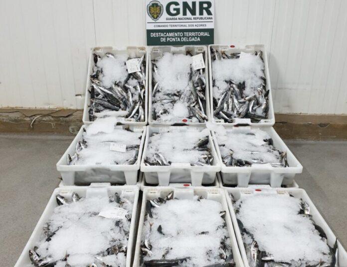 DR/GNR